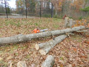 Chainsaw held in place on a tree trunk with a stump vise