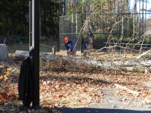 Limbing the tree