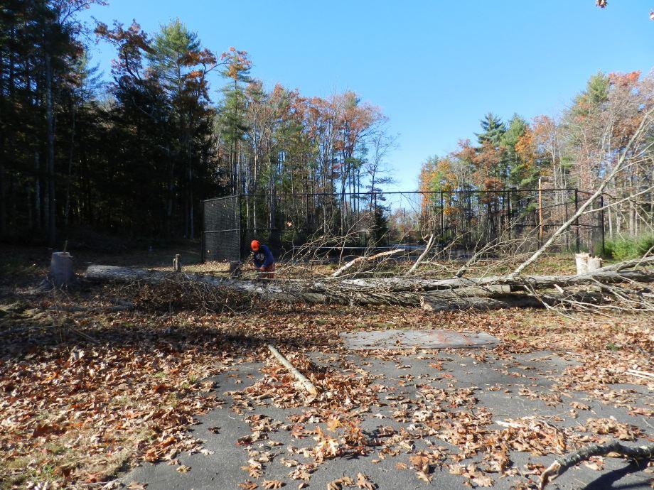 90 Foot tall oak trees take a LOT of work to break down